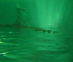 daniel-figgis-AWOL-2006
